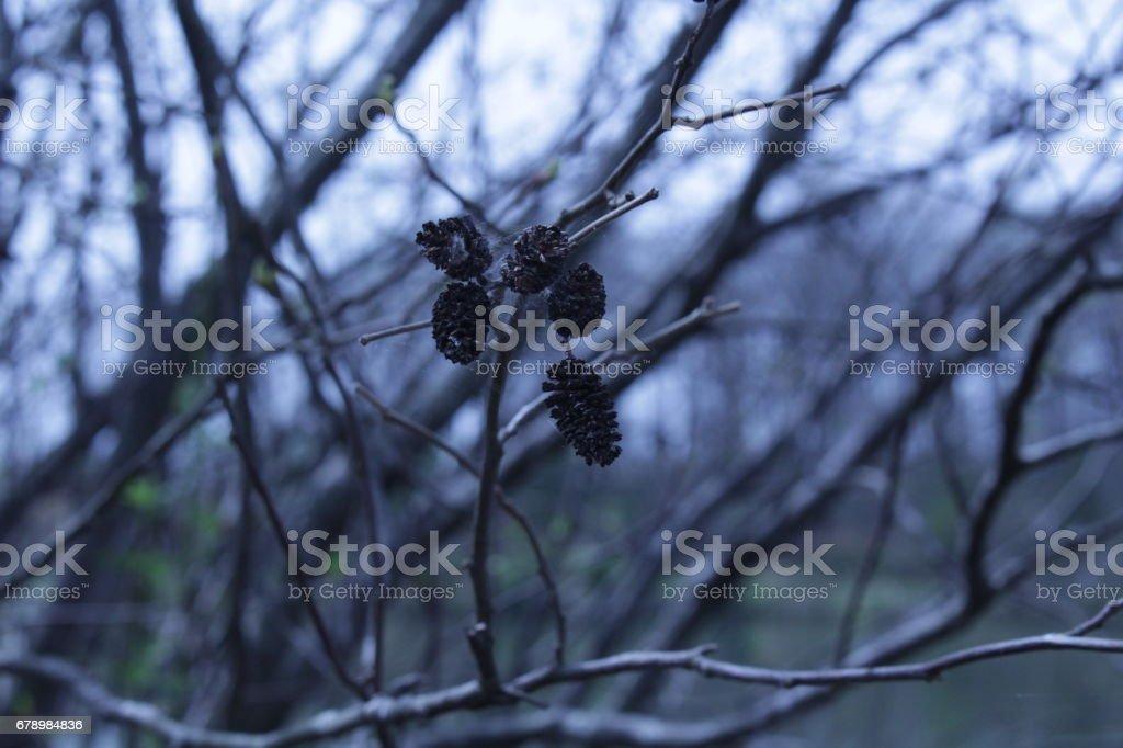Mini pinecones arıyorsunuz royalty-free stock photo
