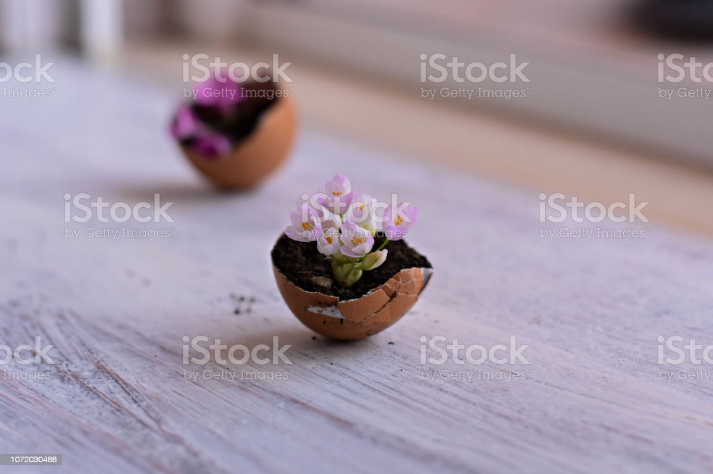 Mini pink flowers in eggshells on a wooden background/ Spring home rustic decoration/ Conceptual image of spring awakenings and new beginnings royalty-free stock photo