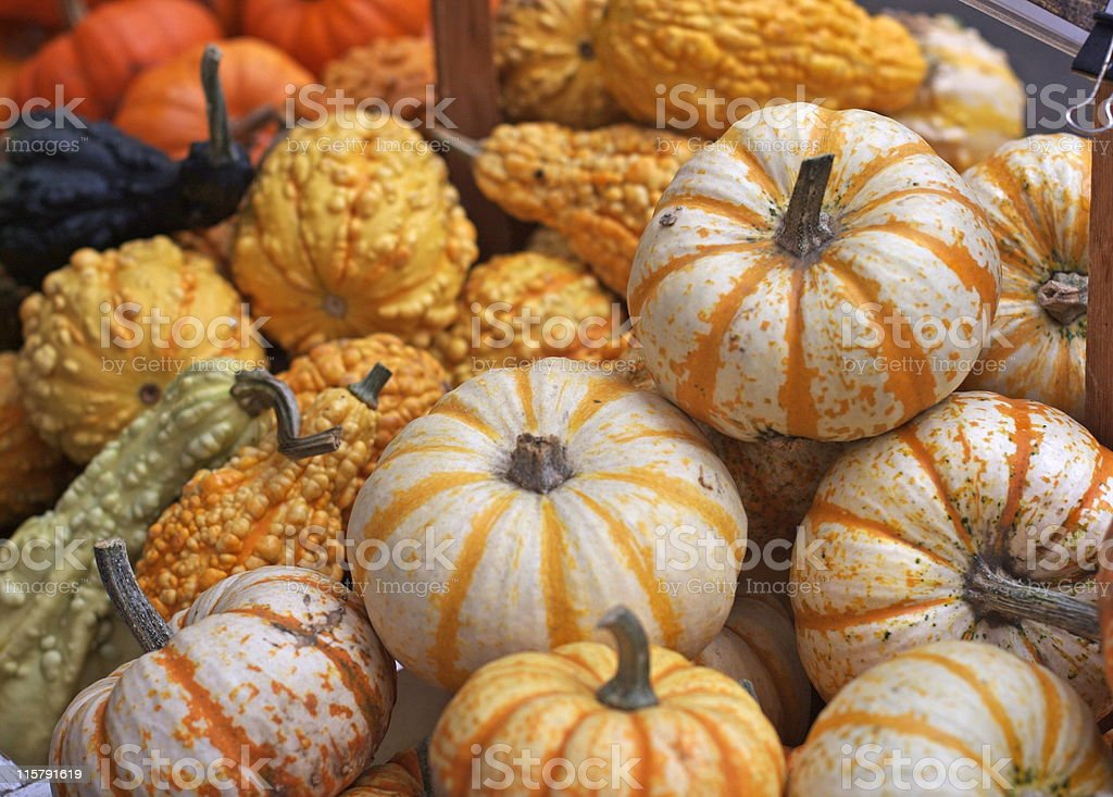 Mini pumkins and gourds royalty-free stock photo