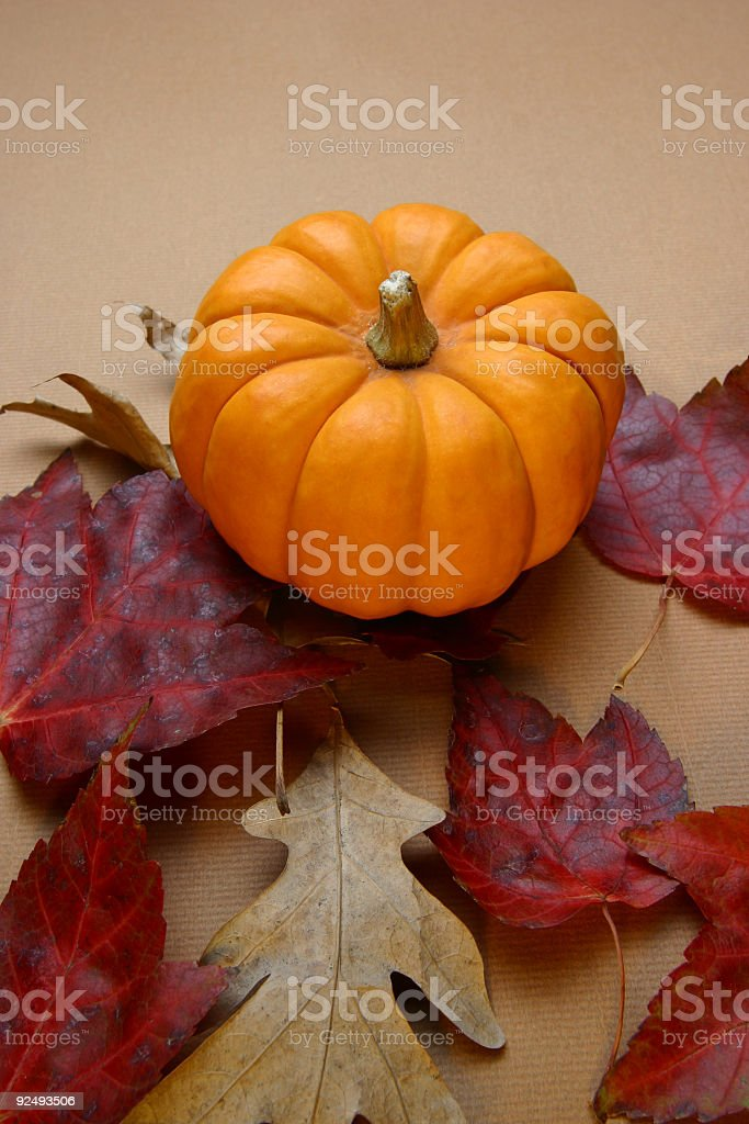Mini Pumpkin Background royalty-free stock photo