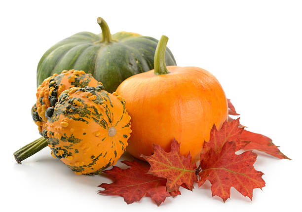 mini pumpkins isolated - gourd stock photos and pictures