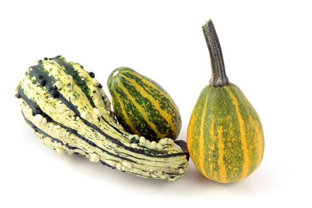 mini pumpkins on white isolated background. green white. - pumpkin pie стоковые фото и изображения
