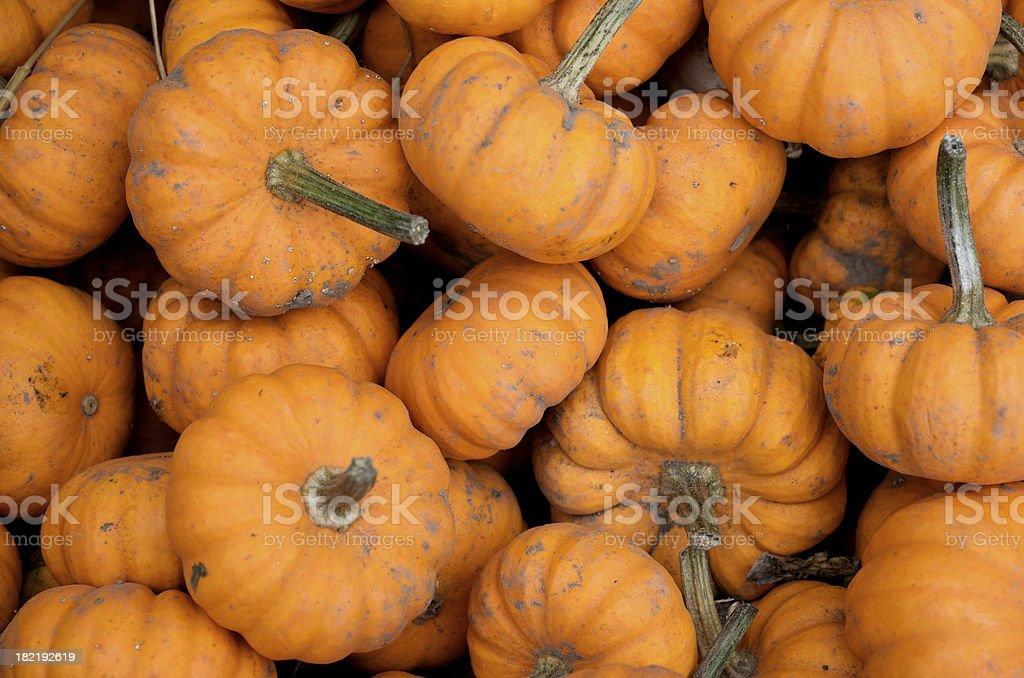 Mini Pumpkins Pile royalty-free stock photo