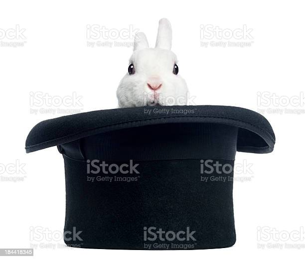 Mini rex rabbit appearing from a top hat isolated picture id184418345?b=1&k=6&m=184418345&s=612x612&h=5c 2f33vr8d3ei3tz3 uv7loo55gasjinqkwlbjtmhc=