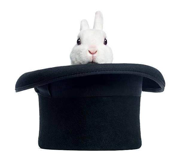 mini rex rabbit appearing from a top hat, isolated - magician stock photos and pictures
