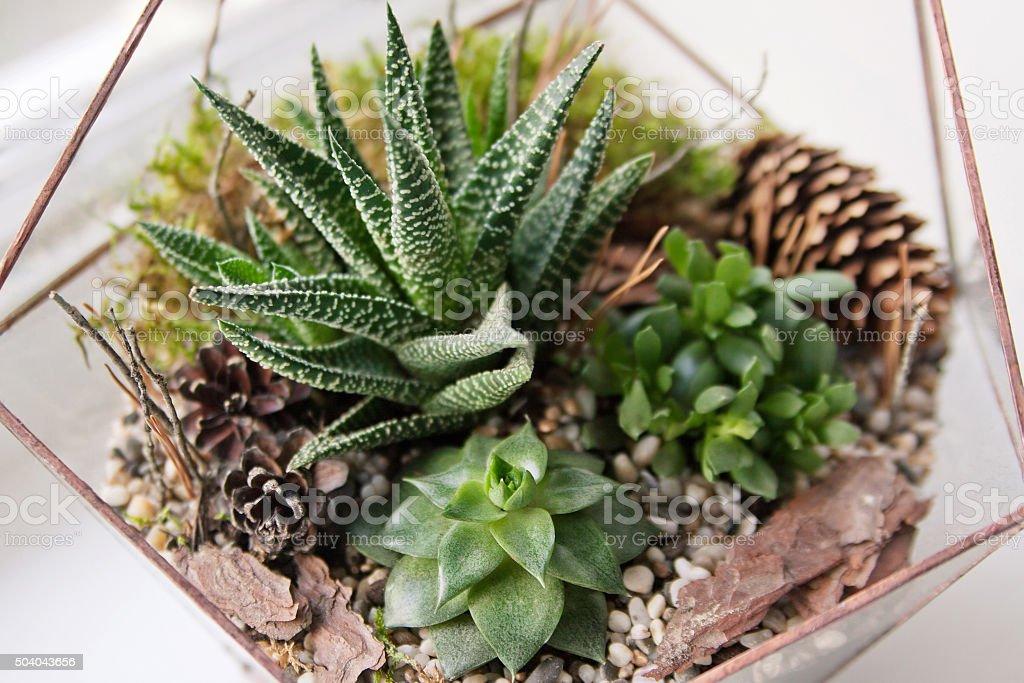 mini succulent garden in glass terrarium stock photo