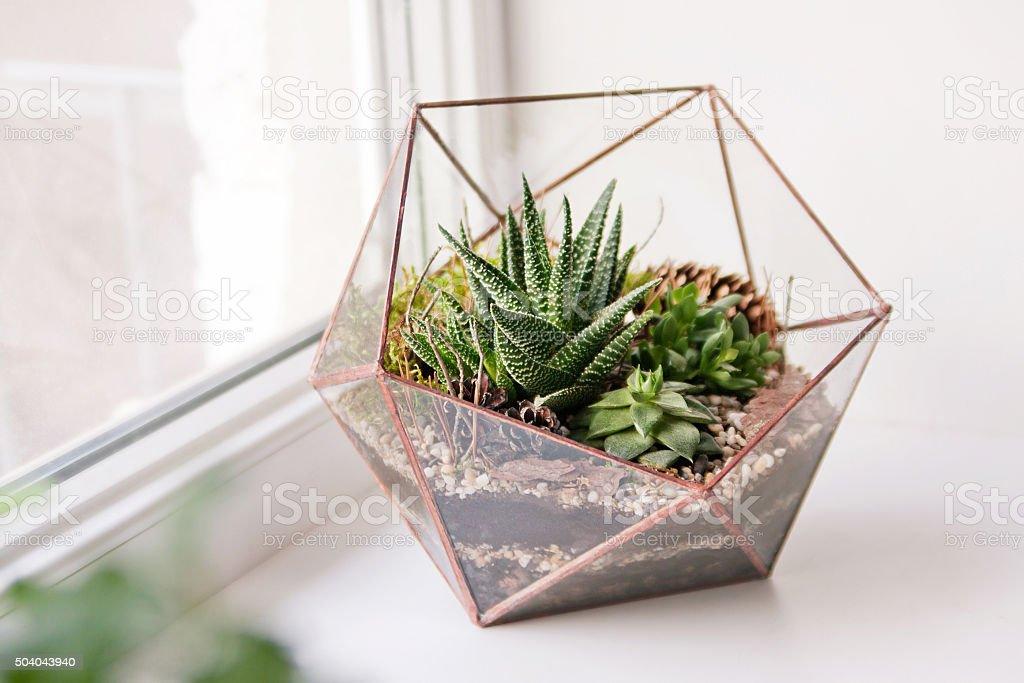 Mini Succulent Garden In Glass Terrarium Stock Photo More Pictures