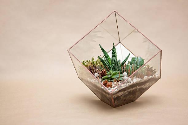 mini saftige garten in glas terrarium - terrarienpflanzen stock-fotos und bilder