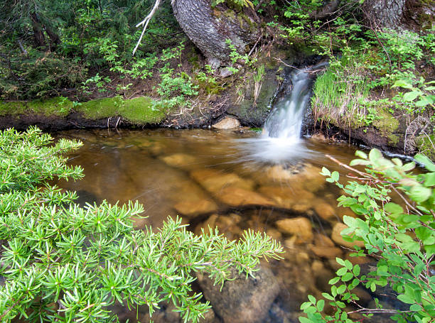 Mini Waterfall in Forest stock photo