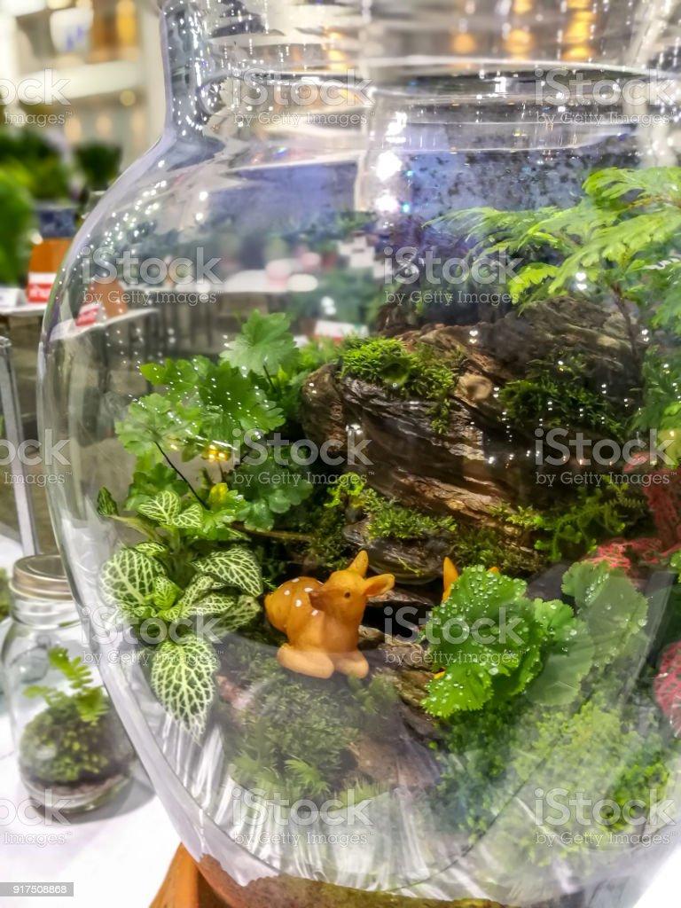 jardin miniatura Jardn Miniatura En Tarro De Cristal Decoracin Casera Foto
