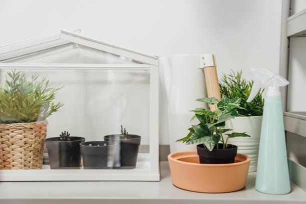 mini-gewächshaus-terrarium. - terrarienpflanzen stock-fotos und bilder