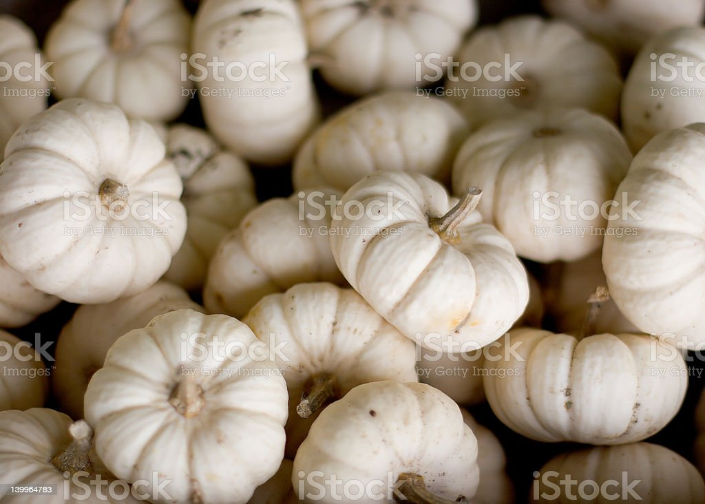 Miniature pumpkins royalty-free stock photo