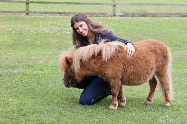 miniature shetland pony with russian outdoor girl model - whiteway pony stock photos and pictures