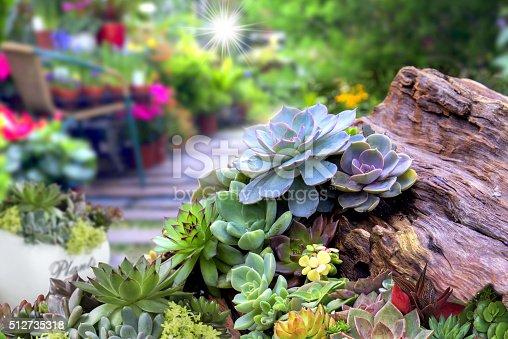 istock Miniature succulent 512735318