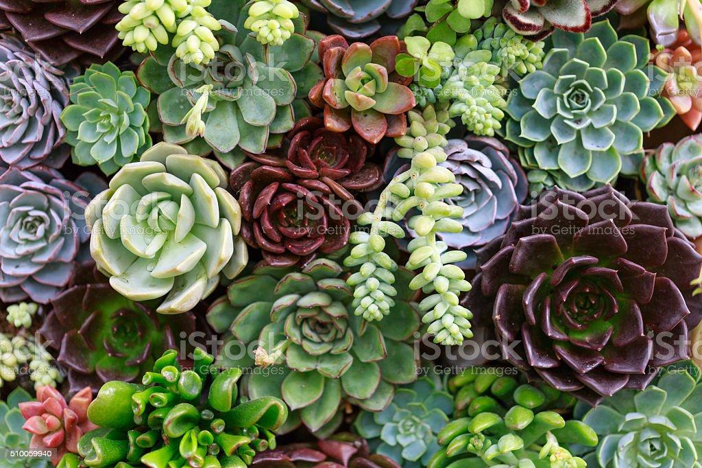 Miniatura e plantas suculentas - foto de acervo