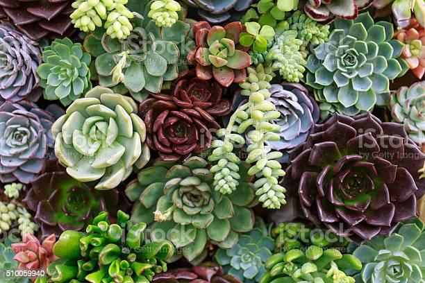 Photo of Miniature succulent plants