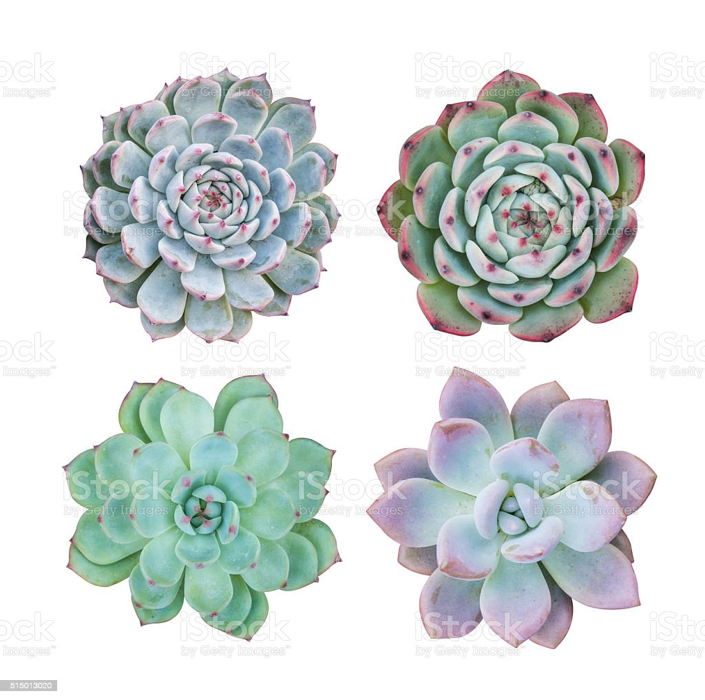 ... Miniature Succulent Plants Stock Photo ...