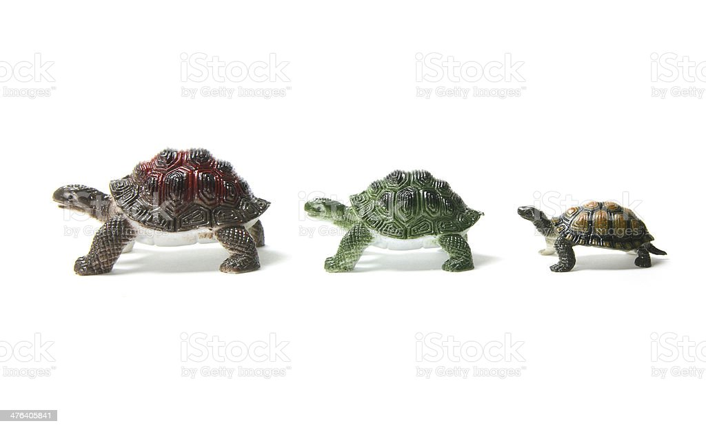 Miniature Tortoises royalty-free stock photo