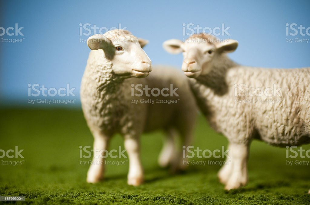 Miniature Toy Sheep stock photo
