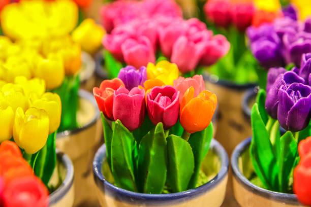 miniature tulips in a pot