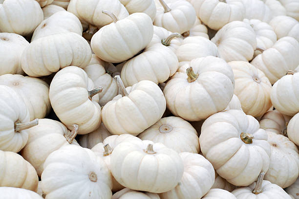 Miniature White Pumpkins in a Pile Close-Up stock photo