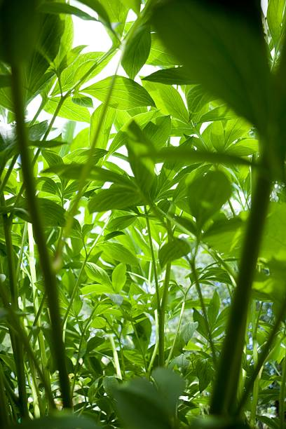 Mini-Dschungel – Foto