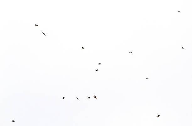 oiseaux minimaux volant dans l'espace blanc - icône de ligne photos et images de collection