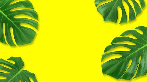 minimale zusammensetzung flach legen grünes tropischen blatt. kreative layout tropic hinterlässt rahmen mit textfreiraum auf pastell gelb hinterlegt.  sommer-konzept - blumendrucktapete stock-fotos und bilder