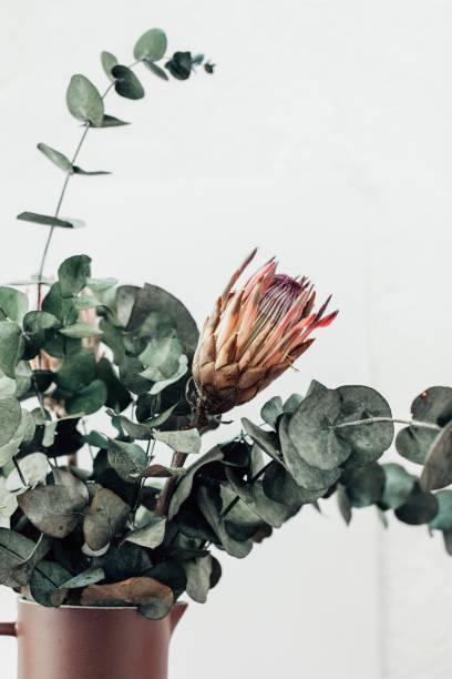 minimale blütenkomposition mit rprotee und eukalyptus im bohème-stil - protea strauß stock-fotos und bilder