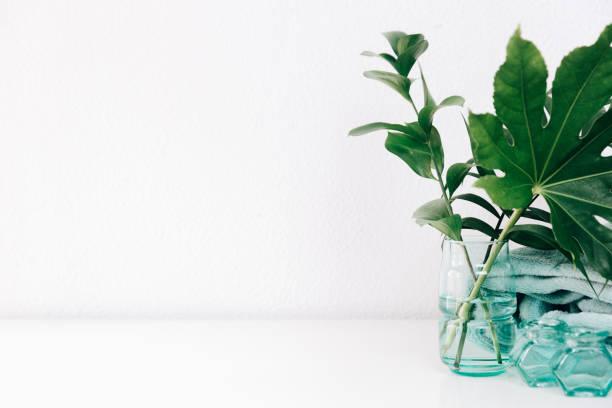 minimale wohnkultur mit textfreiraum. grüne blätter in vase - vase glas stock-fotos und bilder