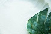 istock Minimal Leaf white background 894408418