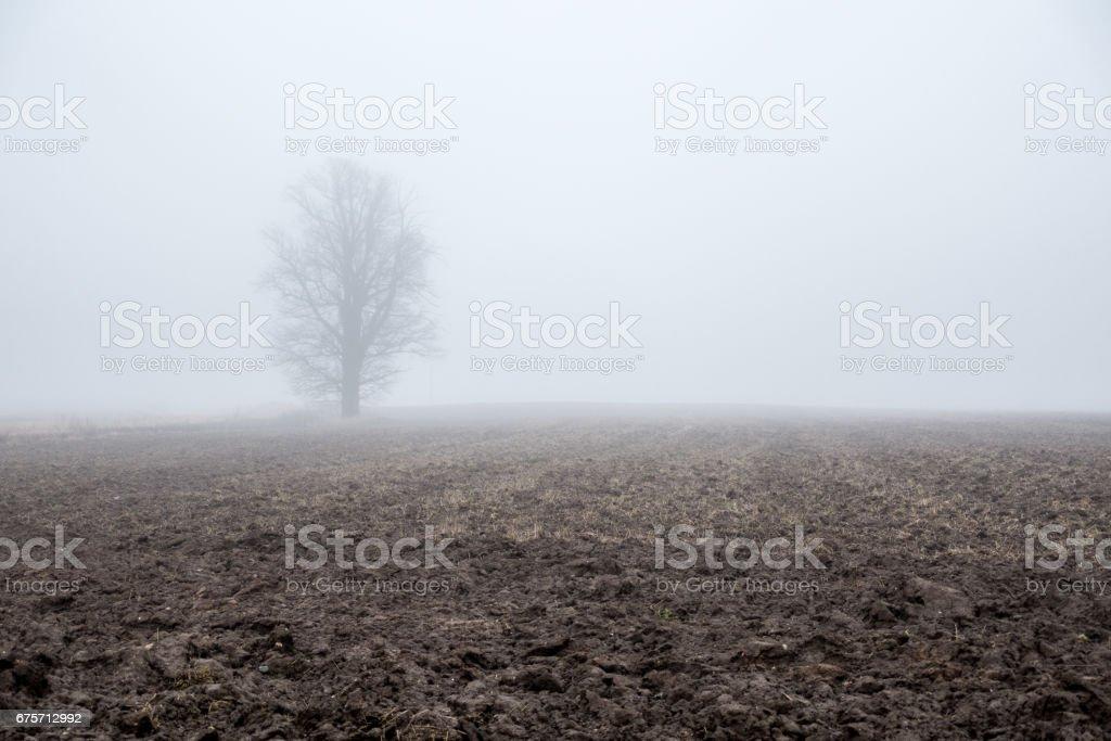 極簡主義。晨霧和一棵孤獨的樹。 免版稅 stock photo