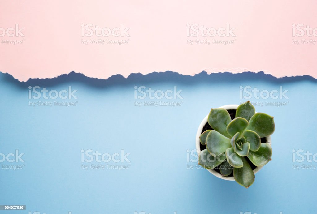 Minimalism. royalty-free stock photo