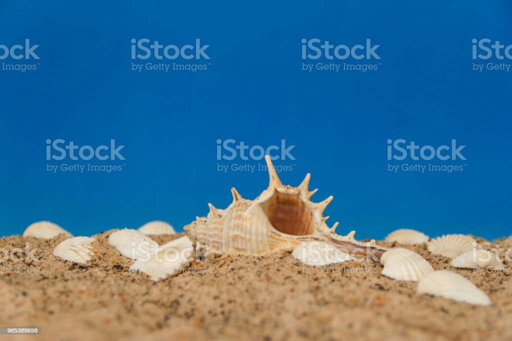 minimalist background representing the summer with snails clams goggles and sand on celestial royalty-free stock photo