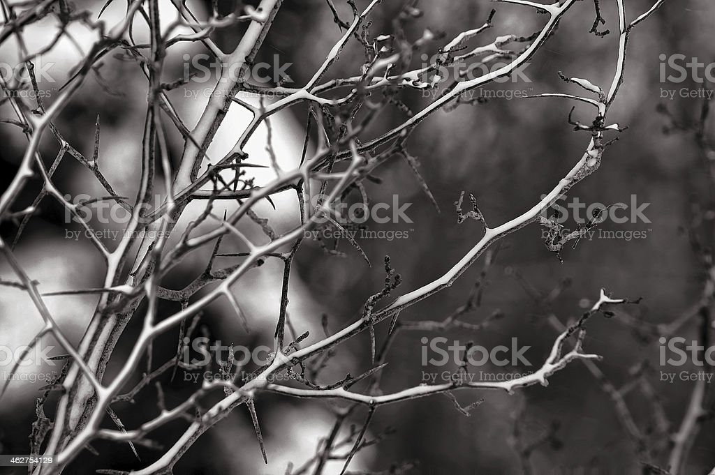 Minimalist concept, close up dry branch covering snow royalty-free stock photo