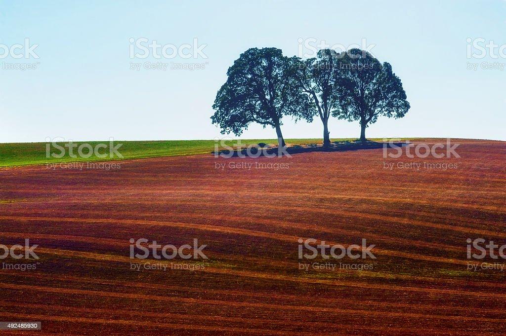 Minimalist of three trees in a field stock photo