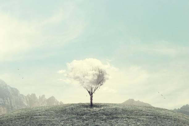 minimalistische surreale winterlandschaft - landscape crazy stock-fotos und bilder