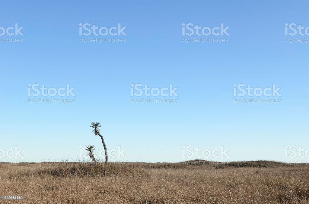Minimalist winter landscape near the Gulf of Mexico stock photo