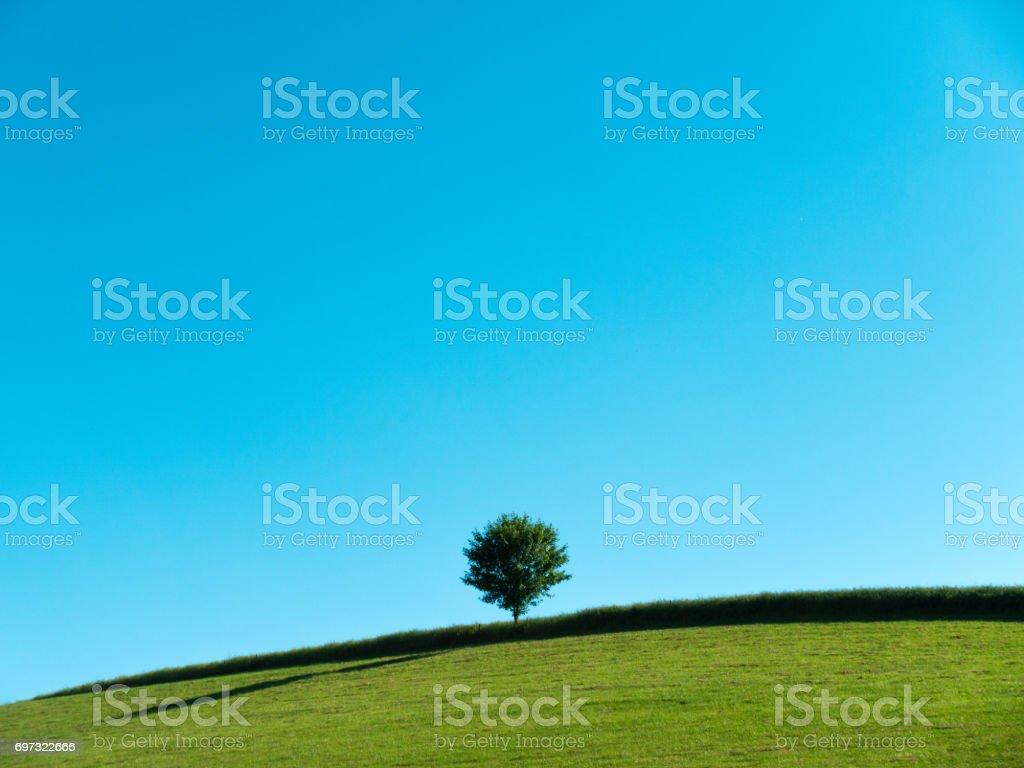 Minimalistische Landschaft: Baum auf einem Feld mit blauem Himmel – Foto