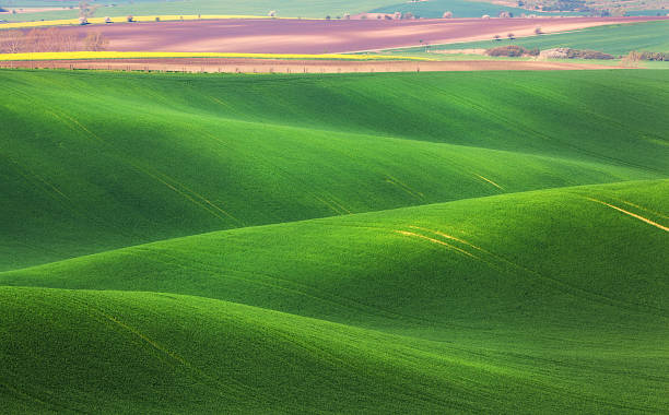 Minimalistic landscape with green fields, rolling hills at sunrie Amazing fairy minimalistic landscape with green fields in the morning in South Moravia, Czech Republic. Waves hills, rolling hills. Abstract nature background moravia stock pictures, royalty-free photos & images