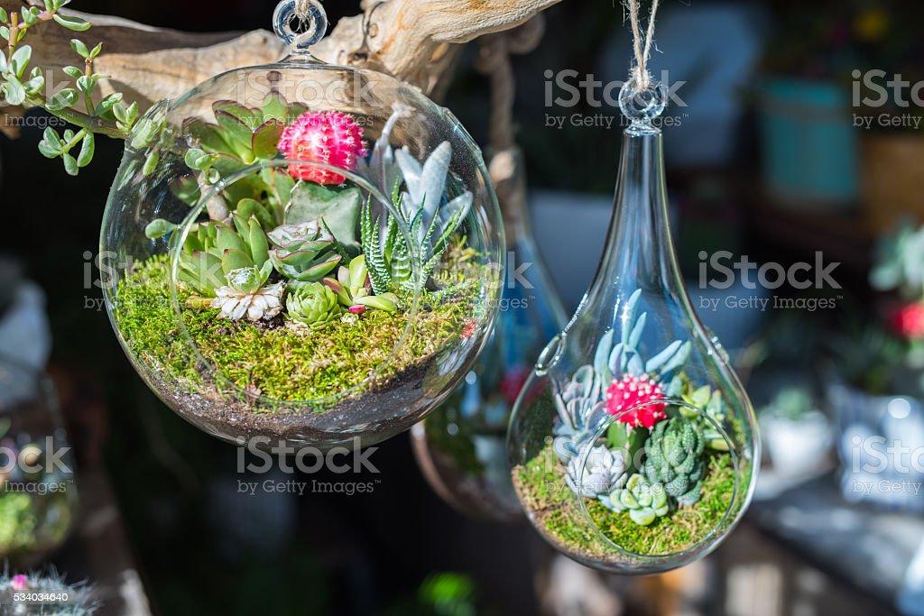 Mini-succulents in glass terrariums. stock photo
