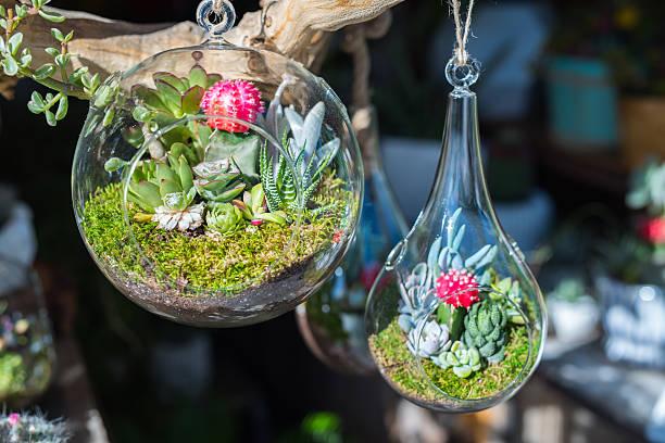 mini-sukkulenten in glas terrarien. - terrarienpflanzen stock-fotos und bilder