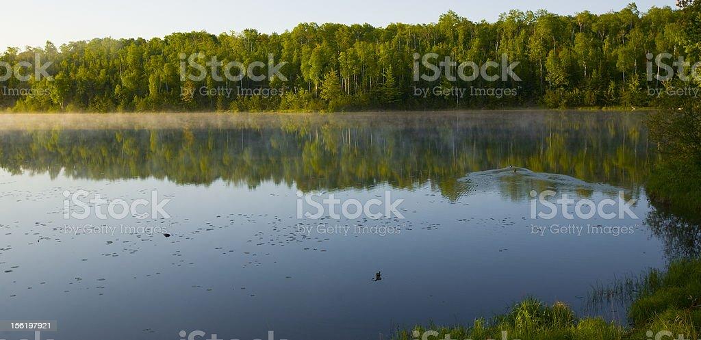Minnesota Summer Morning stock photo