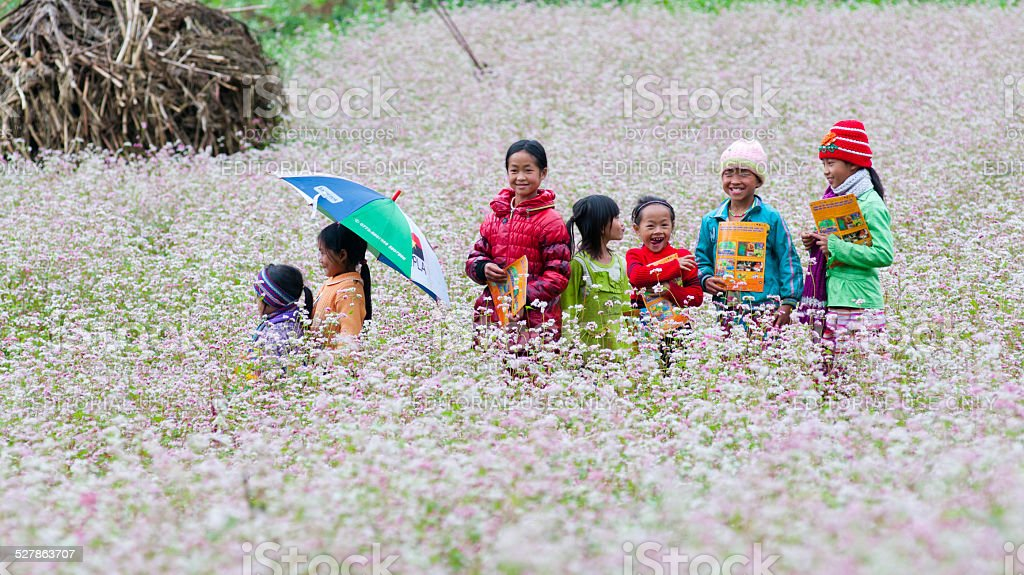 Minority ethnic kids in a buckwheat flower field in Hagiang stock photo