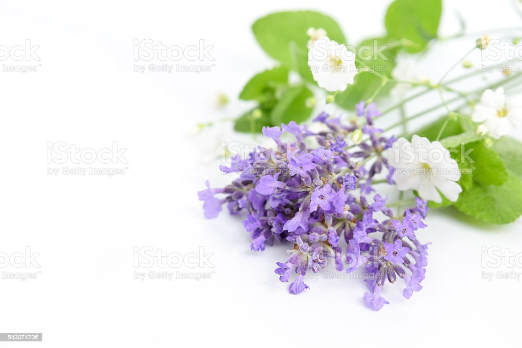 mint and lavender stock photo