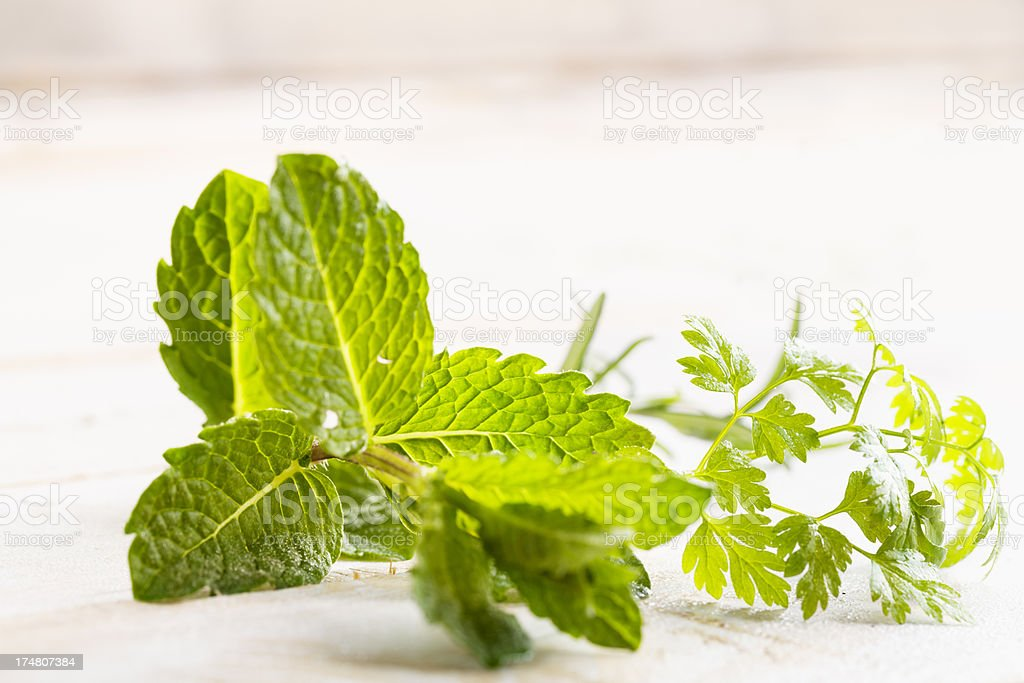 mint chervil herb freshness royalty-free stock photo