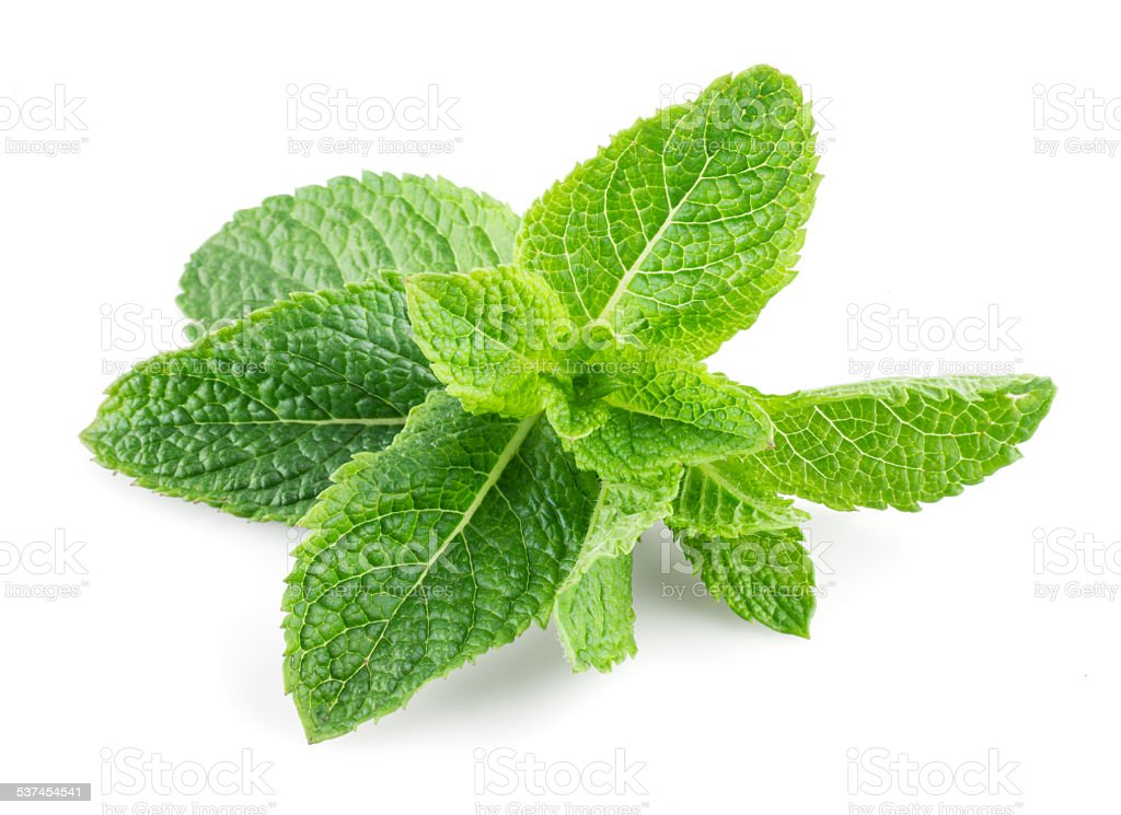 Mint isolated on white background stock photo