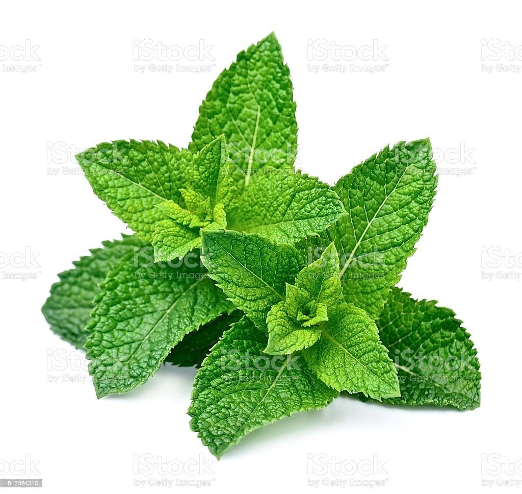 Mint leaf close up stock photo