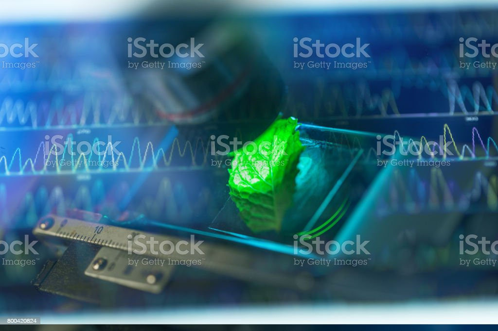 mint leaf on microscopy with DNA sequence peaks stock photo