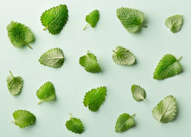 mint leaf pattern on pastel background. variation of peppermint leaves viewed from above. top view - liść mięty przyprawa zdjęcia i obrazy z banku zdjęć